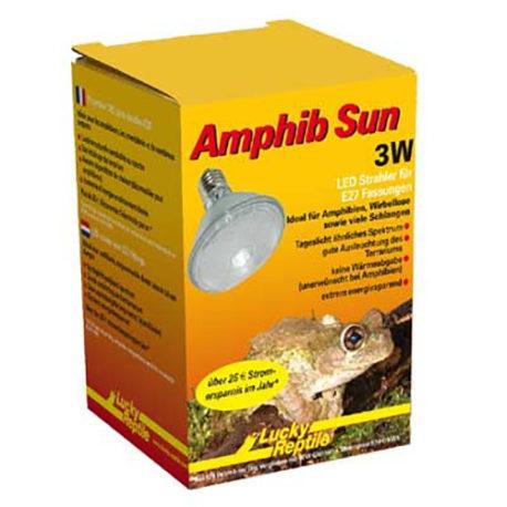 Amphib Sun