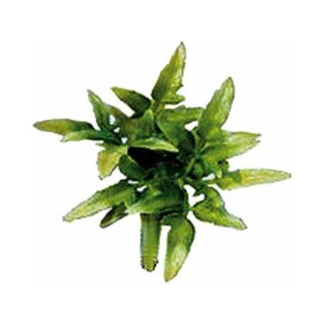 Kunstpflanze Croton