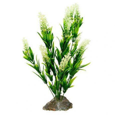 Borneo Gras