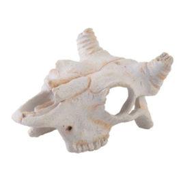 Buffalo Skull Schädelhöhle