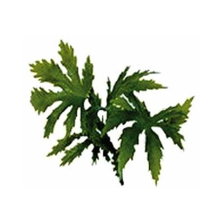 Canabis Kunstpflanze