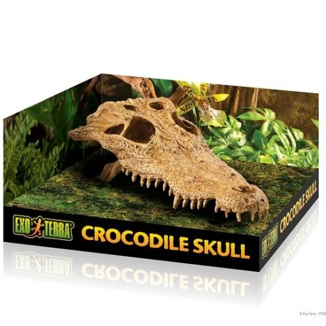 Crocodile Skull Höhle