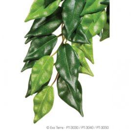 Ficus Seidenpflanze