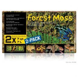 Terrarium Forest Moos