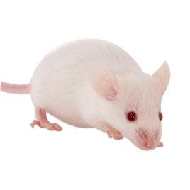 Frostnager Maus