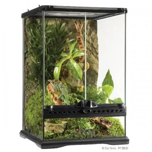Glas Terrarium 2602