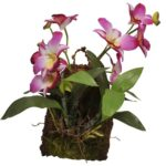 Hänge Orchidee