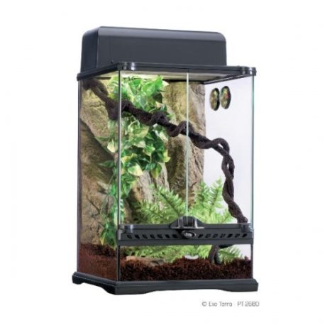 Habitat Kit Rainforest Glasterrarium