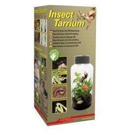 Insect Tarrium