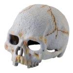 Primate Skull Schädel