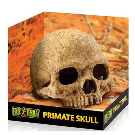 Primate Skull Totenkopf Höhle
