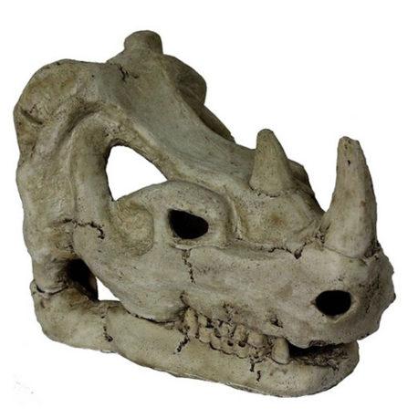 Rhino Skull Schädel