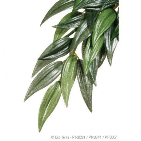 Ruscus Seidenpflanze