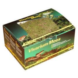 Vivarium Moos