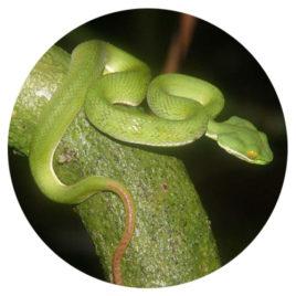 Reptilien-Reise 2 + 3 Anzahlung