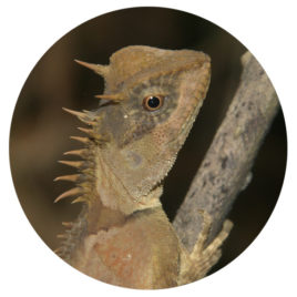Reptilien-Reise 2 Restzahlung