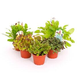 8 Futterpflanzen gemischt