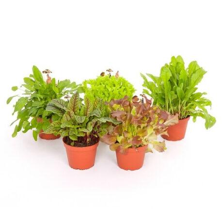 Sortiment Blattpflanzen