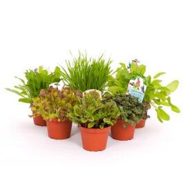 Futterpflanzen Sortiment Kleintier