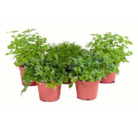 Sortiment Wiesenpflanzen