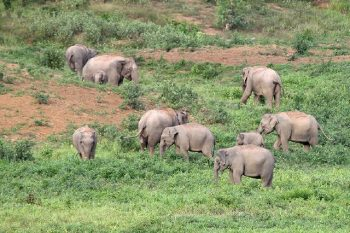 Elefantensafari_07 (1)