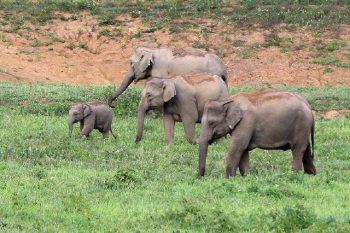 Elefantensafari_107