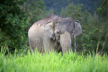 Elefantensafari_108