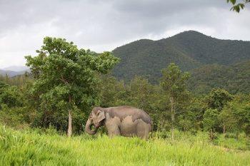 Elefantensafari_118
