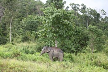 Elefantensafari_119