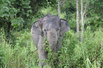 Elefantensafari_121